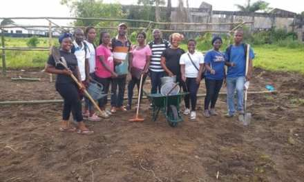 Agro Tech Liberia Launches Seedlings Project in Montserrado
