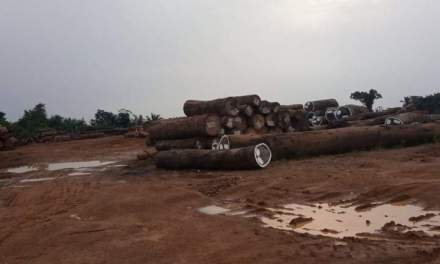 Sinoe: Citizens Alarm Over Increase in Deforestation