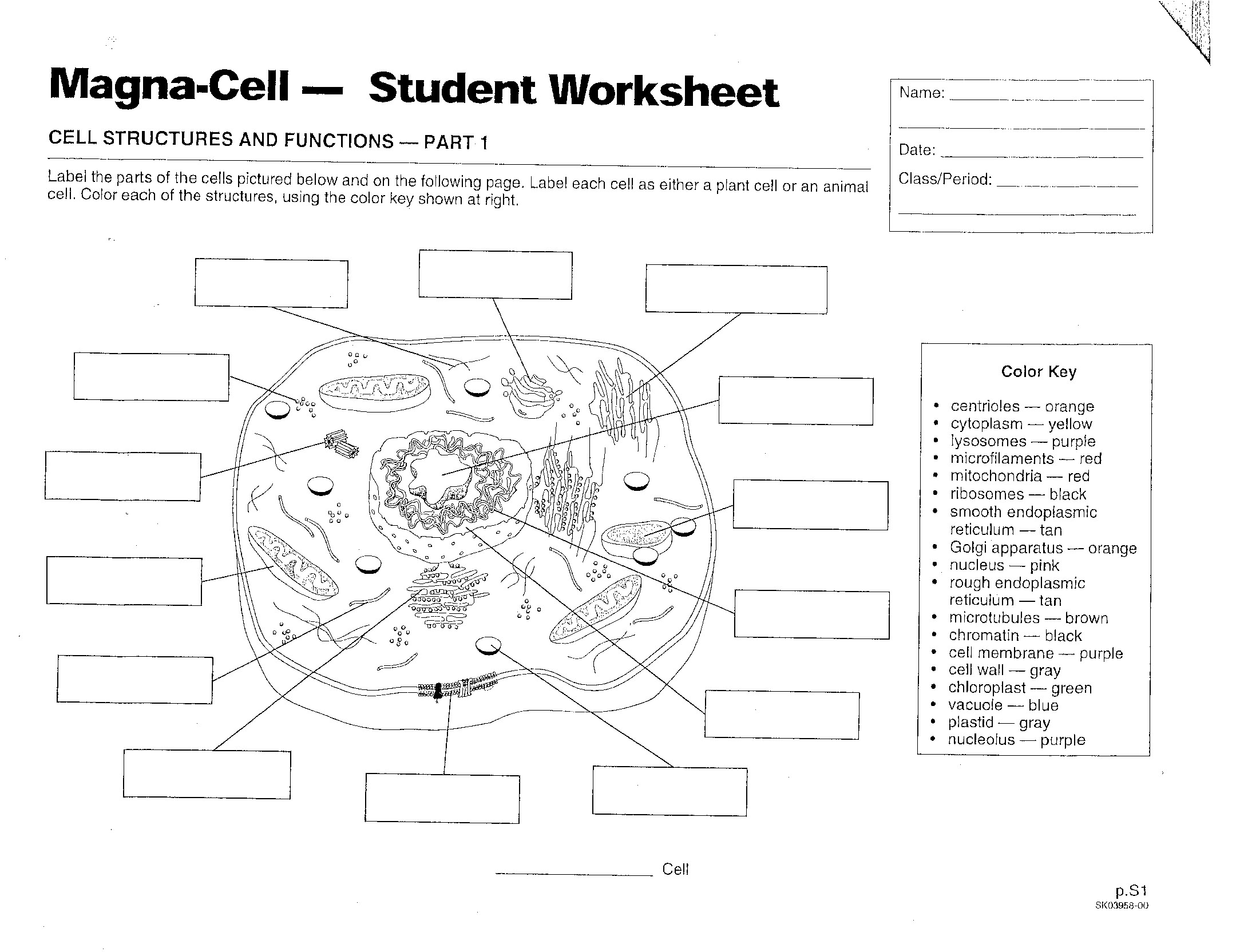 Cell Parts And Functions Worksheet