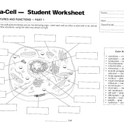 Cells - Mrs. Musto 7th Grade Life Science [ 1664 x 2160 Pixel ]