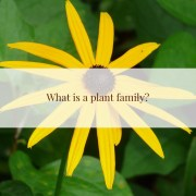 What is a plant family?