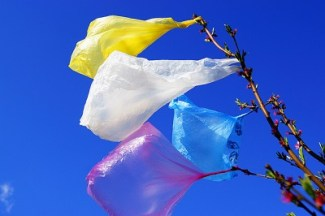 Colorful plastic bags stuck in tree. Victor Andronache / Flickr