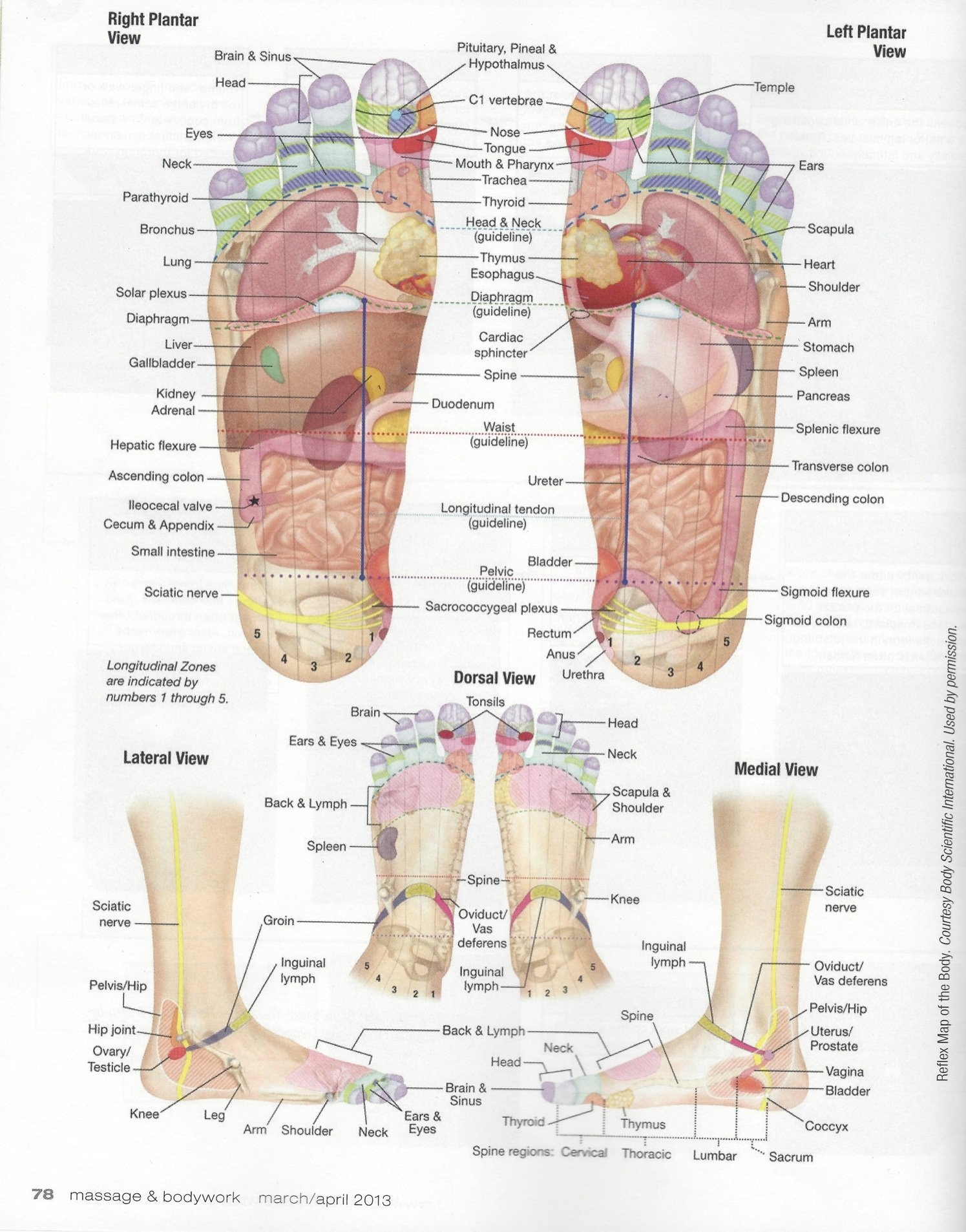 foot massage therapy diagram doorbell schematic of your feet auto wiring today