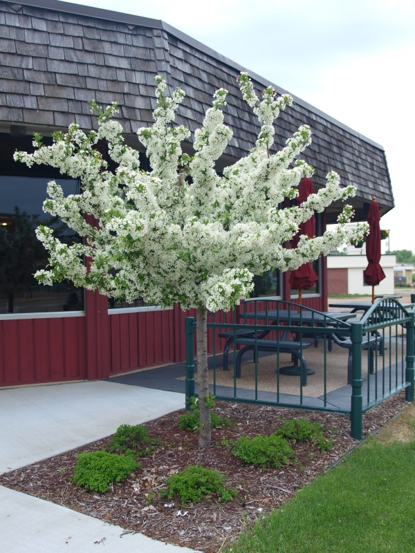 small ornamental trees archives