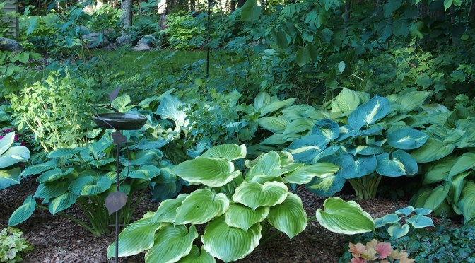My Woodland Garden – June 2, 2016