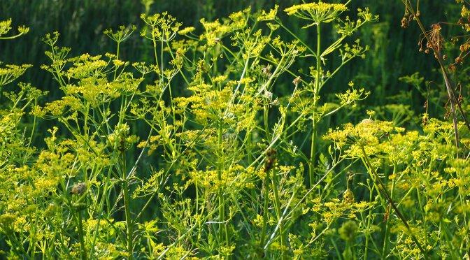Invasive Plant Alert