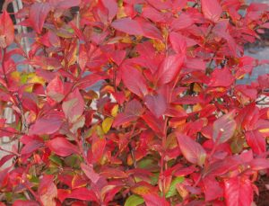 Get Ready for Fall Color!