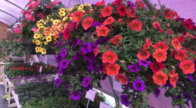 30% OFF all Annuals, Vegetables, Hanging Baskets and Planters
