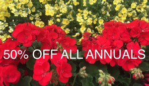 50% OFF ALL ANNUALS!