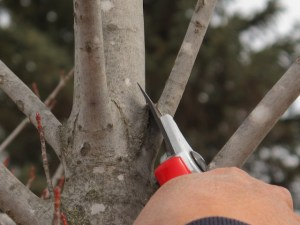 Tree Pruning Basics