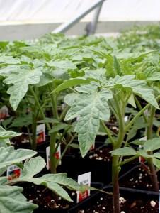 Let's Get Growing! Preparing your Veggie Garden