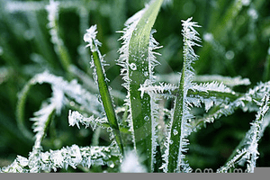 Frost preparations!