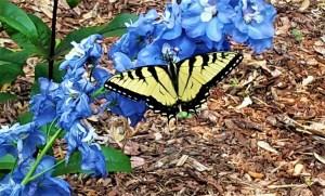 National Pollinator Month: Perennial Pollinator Garden Basics