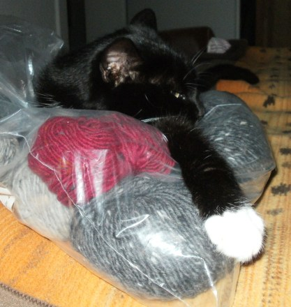... the cat who likes both: plastic-bag and tweedwool ...