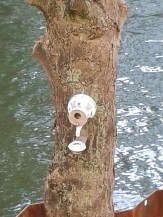 At the Oudegracht - lovely bird's house from an old teapot - even with water reservoir