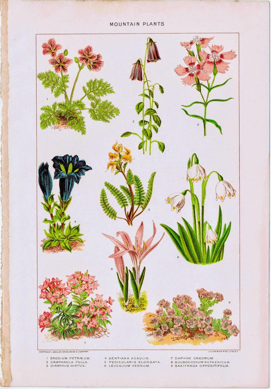 Antique Nature Printable