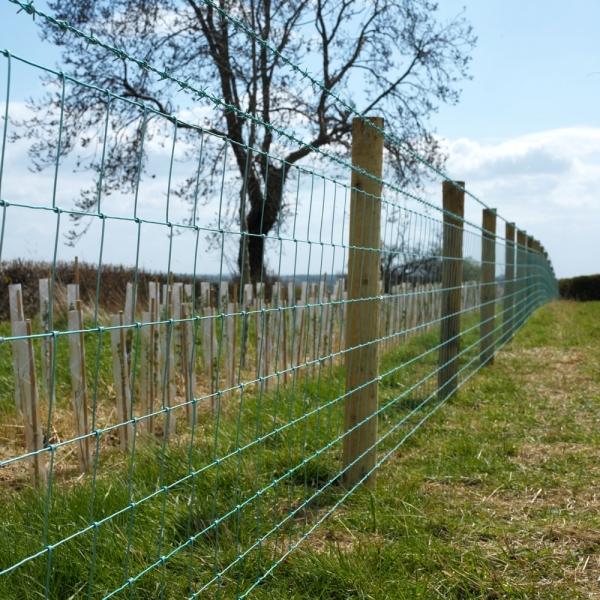 Rylock Green Knight Fencing