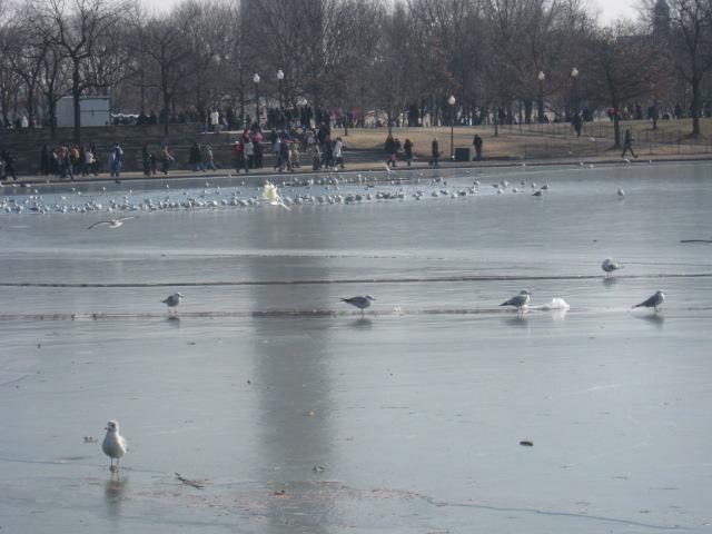 winter08_09-005