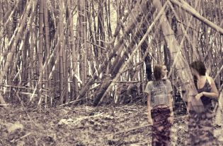 MaggieSwain_PaceAcademy_Photography_BambooForest