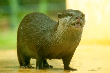 Otters were faves.