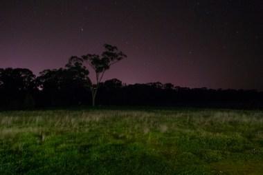 'Savannah' by night.