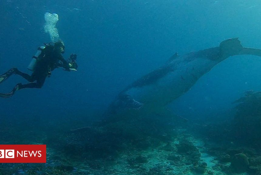 Whale migration: Super rare whale encounter on the Great Barrier Reef