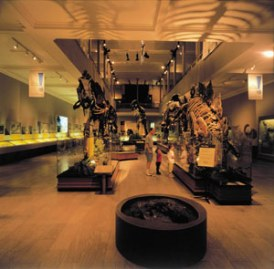 Dino Hall Carnegie Museum