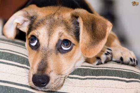 CARF Puppy meet & greet fundraiser bij Hòfi Cas Cora