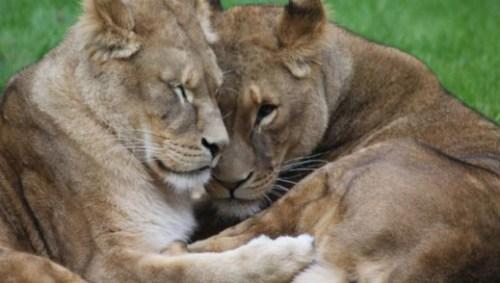 Venezuela-dierentuin-honger
