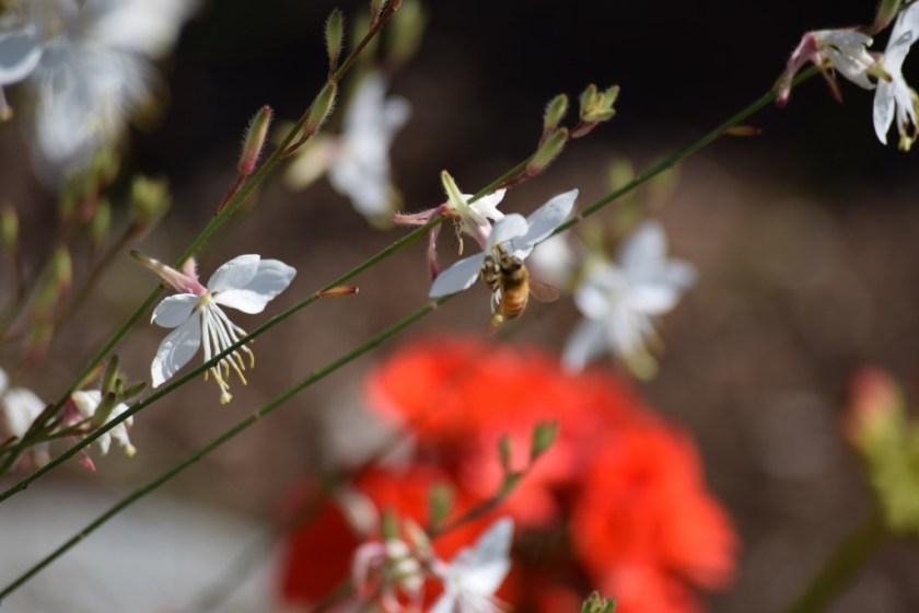 white flwr w bee (2) (1024x683)