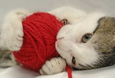 Cat eating red yarn ball