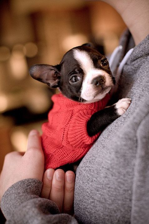Pin Ups and Link Love: Puppy in Sweaters | knittedbliss.com