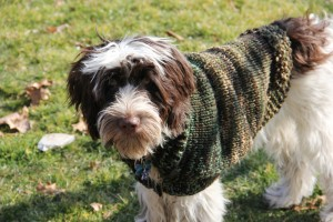dog sweater tracey knits