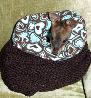Knit pouches for orphaned marsupials.