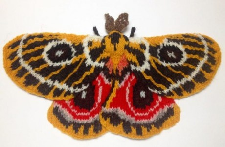 Have You Seen These Amazing Knit Moths?