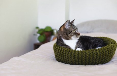 Knit a Super Simple Cat Bed