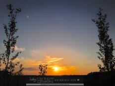 leafy sunset-3
