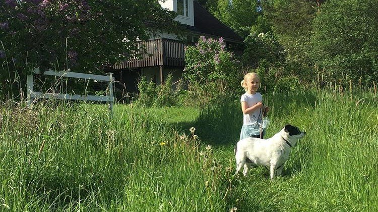 A Beautiful Death: Saying Goodbye to a Beloved Pet