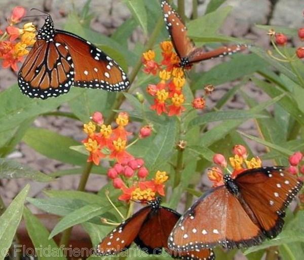 butterfly garden ideas miami-knoll
