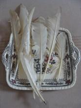 Ganzeveren - Goose quills