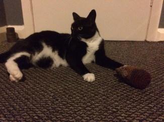 cat, crochet, owl, cat toy