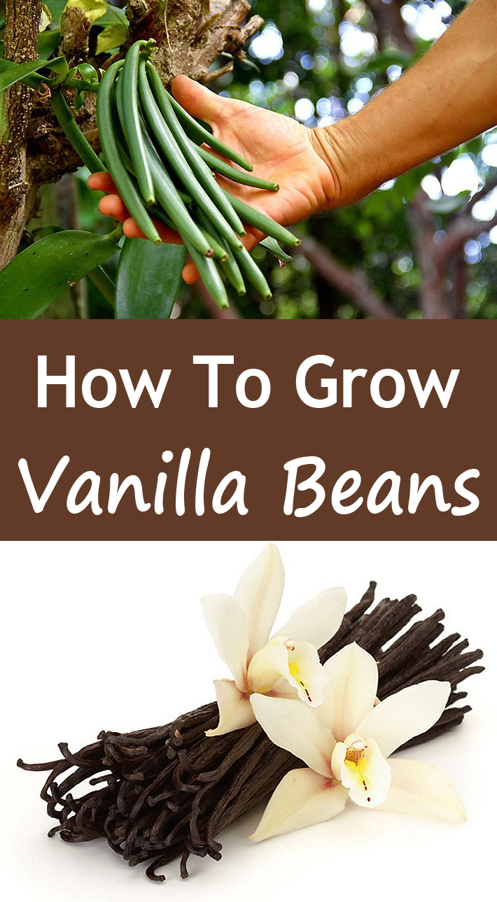 How To Grow Your Own Vanilla Beans