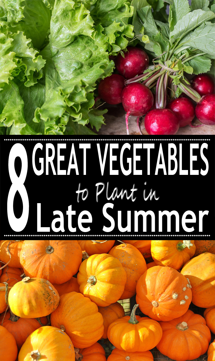 8 Great Vegetables To Plant In Late Summer