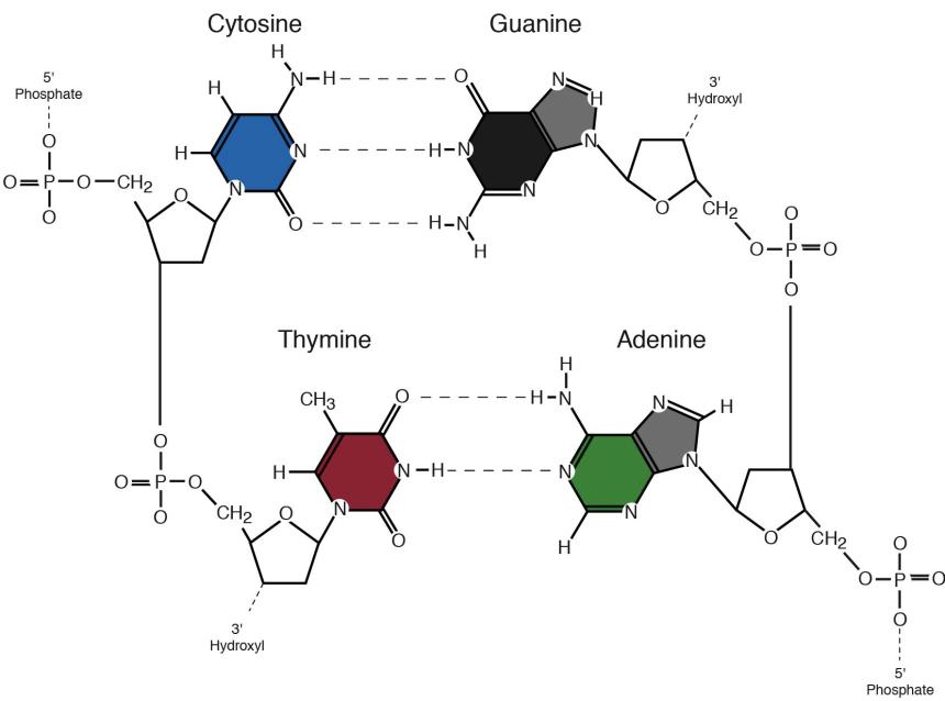 Image result for nucleotides