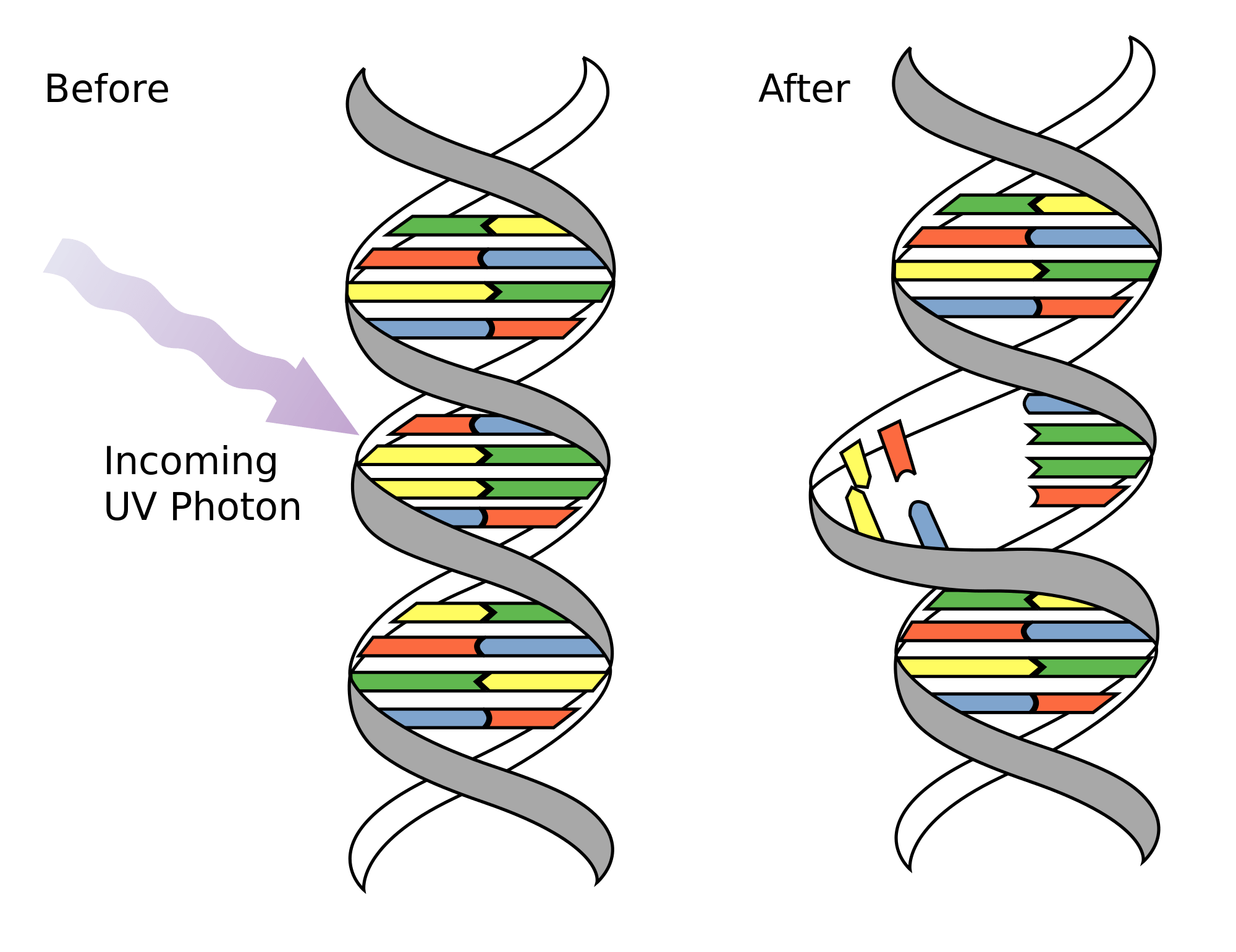 DNA Mutations - Genetics Generation