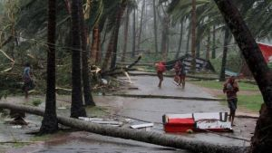 Trees uprooted by cyclone Fani, Odisha