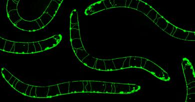 C. elegans Knowing Neurons