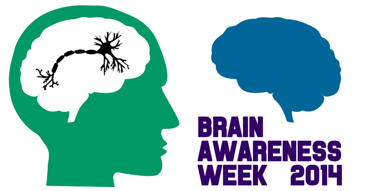 Brain Awareness Week 2014 Knowing Neurons