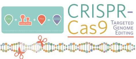 CRISPR-Cas9 Knowing Neurons