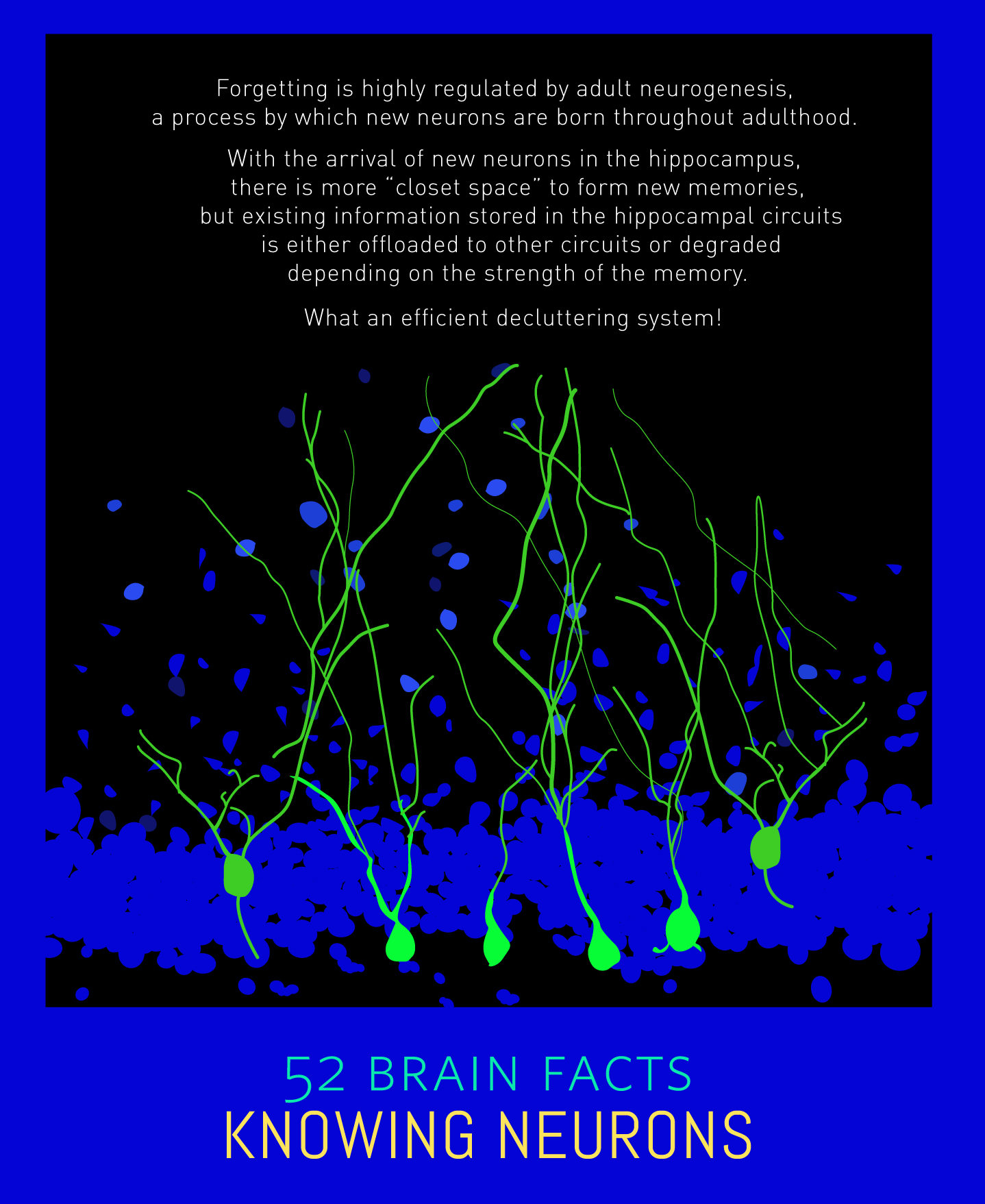 Myth or Fact? Forgetting is a 'technical snag' in the brain.